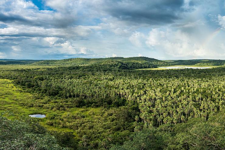 Le colonel Fawcett : au cœur de l'enfer vert de l'Amazonie