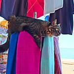 Cefalù - Le chat veille au grain