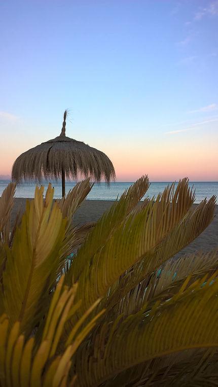 Parasol palmier