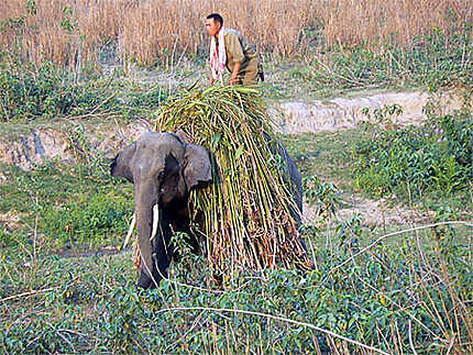 Dîner de l'éléphant
