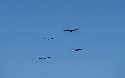 L'Escadrille el Condor