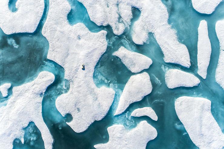 Ours polaire au repos, Baffin Island, Canada