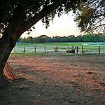 Le jour se lève sur le Pantanal