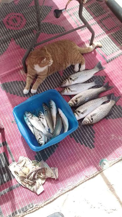 Pêche à Nouadhibou