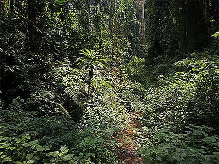 La flore ravissante dans la forêt de Nyungwe