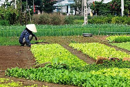Agricultrice au village bio de Tra Que