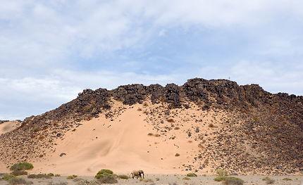 Éléphant du désert en Namibie