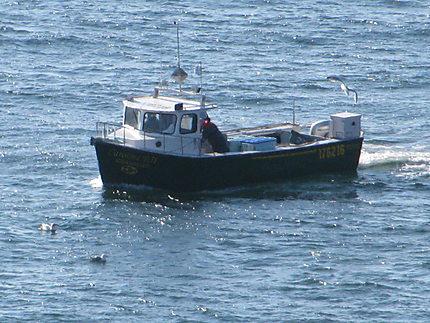 Pêcheurs de homards à Percé