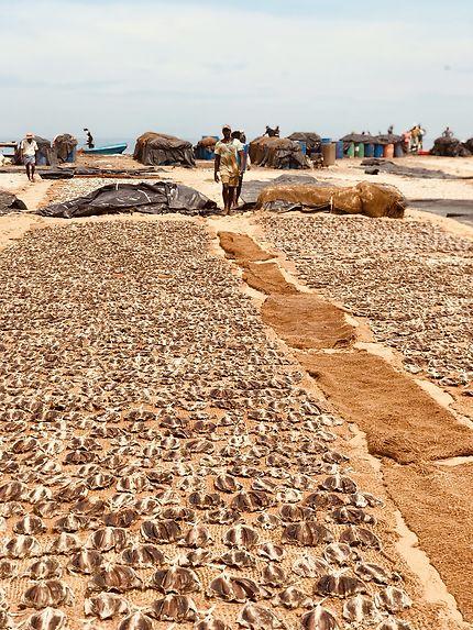 Fishmarket, Negombo