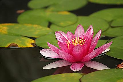 Flore du jardin Liu