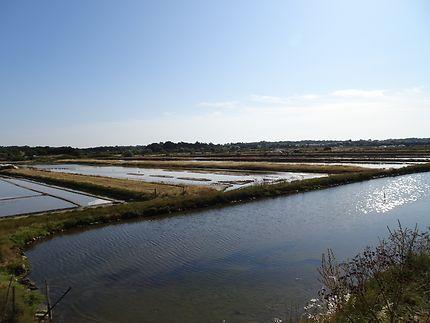 Réserve naturelle près de la jetée