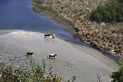 L'estuaire de l'Ostriconi