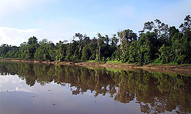 Fleuve Kinabatangan (Sabah)