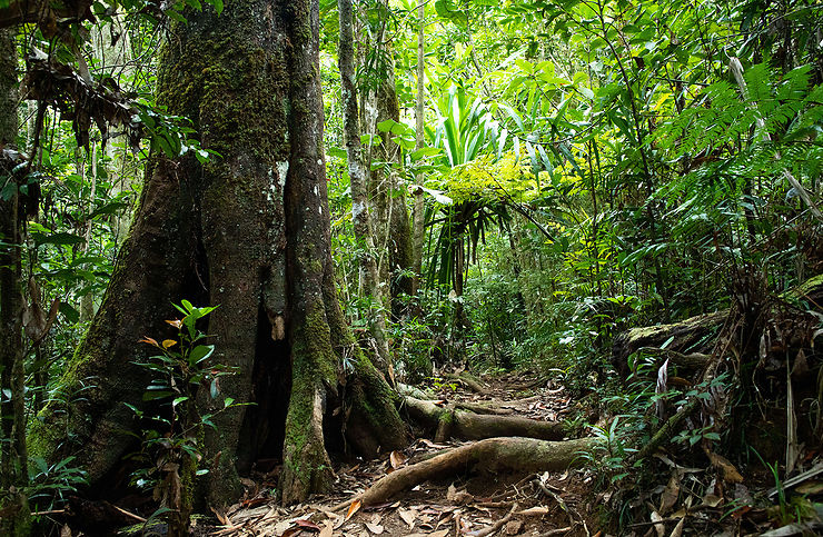 Forêt humide, parc provincial de la rivière bleue