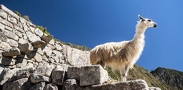 Trésors du sud du Pérou - 12 jours