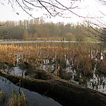 Forêt domaniale de Phalempin - Plan d'eau