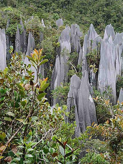 Les pinacles de Gunung Api