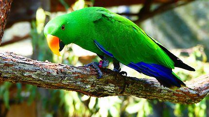 Bird World Kuranda - Perruche