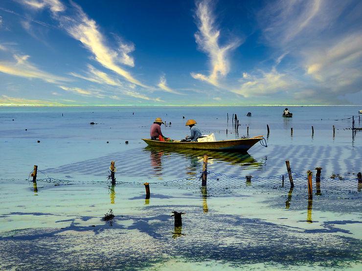 Culture d'algues à Bali