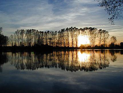 Crépuscule sur l'étang