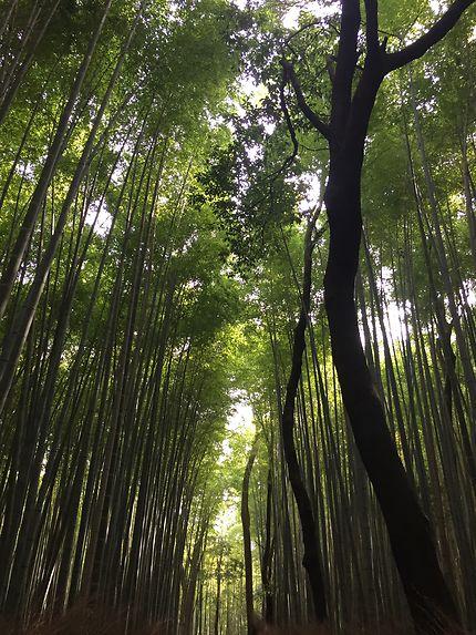Au pays du bambou