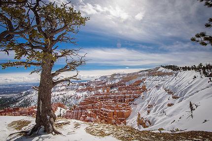Bryce Canyon Rim, Utah