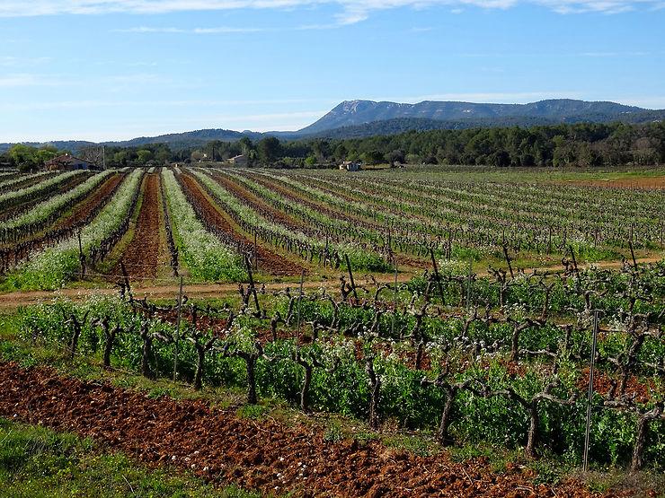 Provence Verte plutôt rouge, blanc ou rosé ?