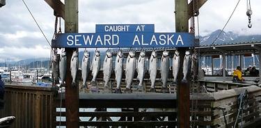 Voyage complet 2 semaines en Alaska
