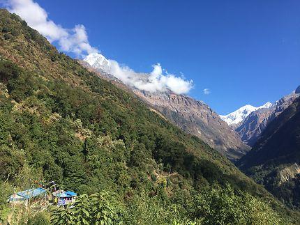 Trek du Sanctuaire de l'Annapurna / Chhamrong