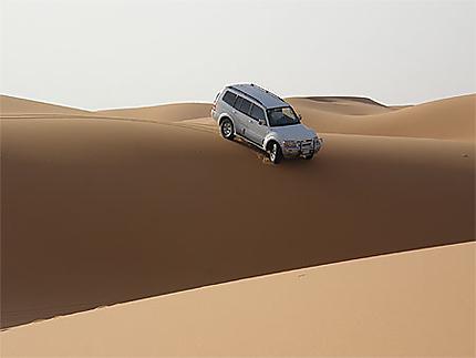 Pajero au désert