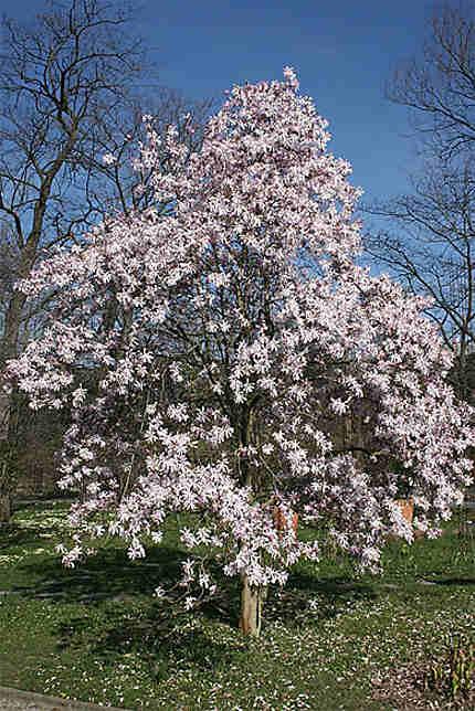 C'est le printemps!