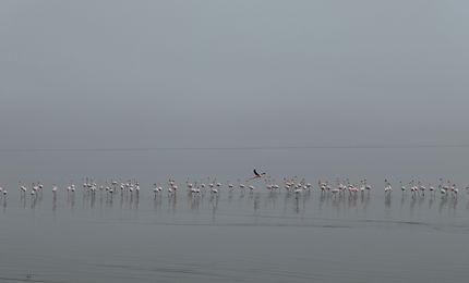 Flamants dans la brume