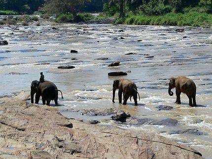 Bain dans la rivière
