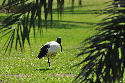 Ibis au Green Mubazzarah