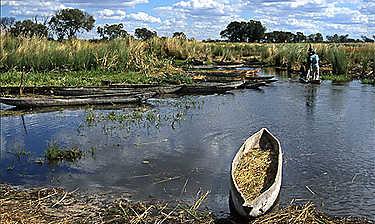 Delta de l'Okavango