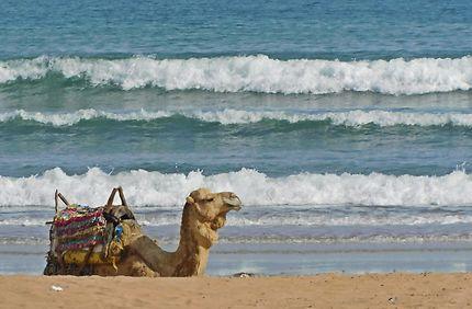 Essaouira - L'empereur des sables