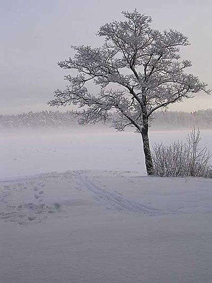 L'arbre blanc