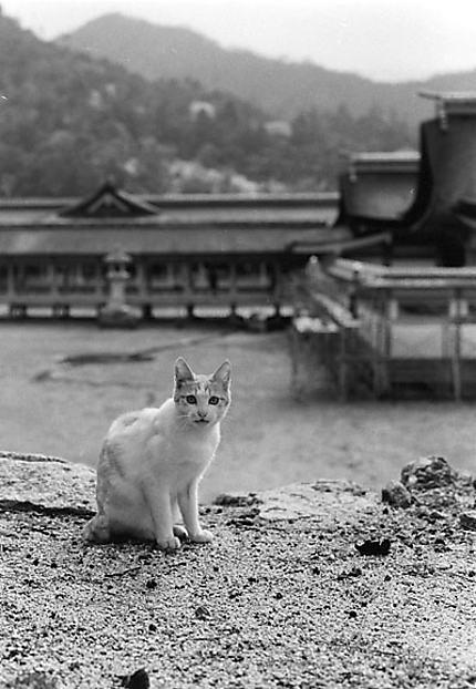 Itsukushima jin-chat