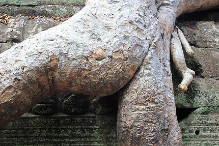 Les racines amoureuses