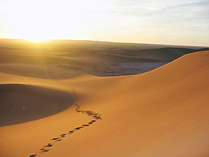 Désert marocain à M'hamid