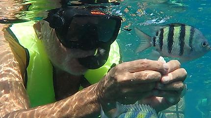 Catamaran Tip Top snorkeling baie de Sosua