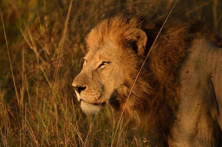 Réserve de Hluhluwe-Umfolozi, Afrique du Sud