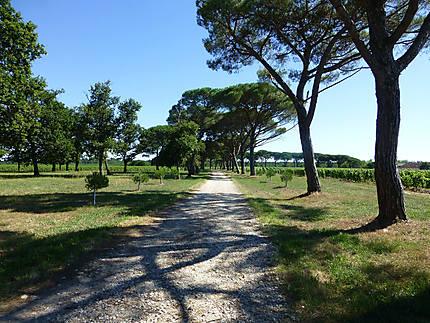 Allée au milieu des vignes