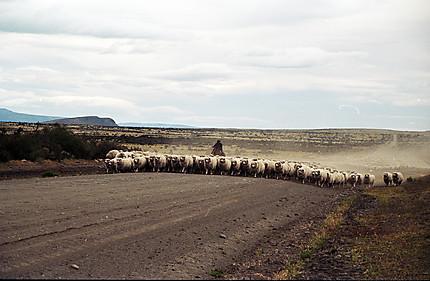 Le retour à la bergerie