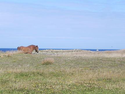 Cheval, voilier, oiseaux en Bretagne