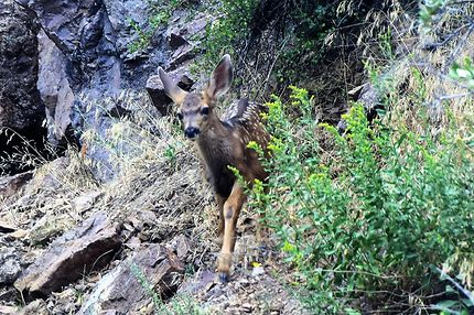 Rencontre dans Black canyon of the Gunnison