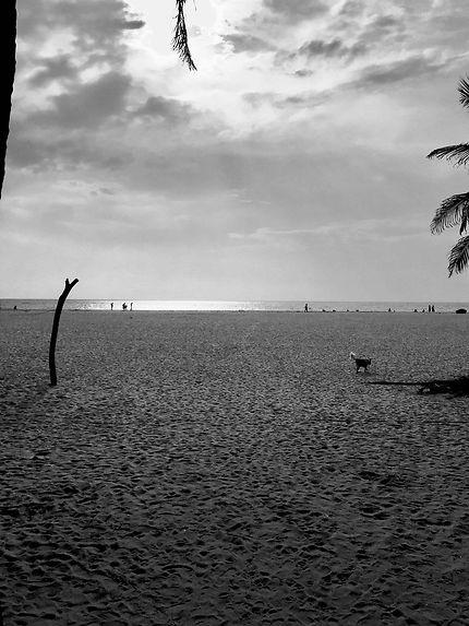 Beautés du soir ? Sous l'azur de Negombo