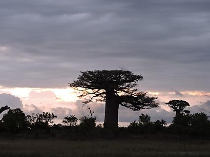 Allée des baobabs au coucher de soleil