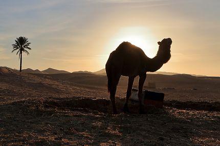 Lever de soleil à Merzouga