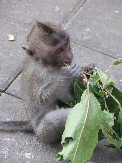 Forêt des singes d'Ubud